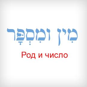 Род и число в иврите