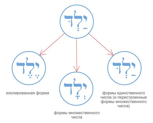 Схема перестроенных форм сеголатов в иврите